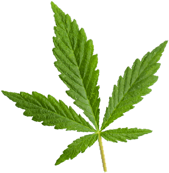 https://mysunrise.ca/wp-content/uploads/2018/12/marijuana_leaf.png
